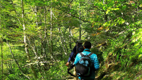 People hiking in the autumn forest Stock Video Footage