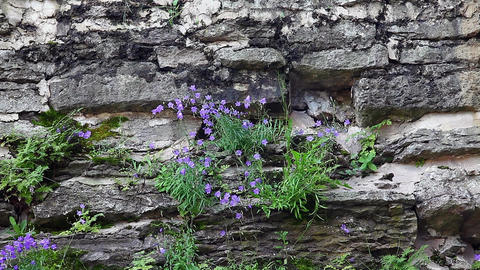 Flowers On The Stone stock footage