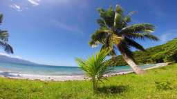 Tropical beach with palm trees Footage
