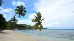 Palm trees on tropical beach Footage