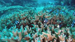 Underwater tropical reef Stock Video Footage