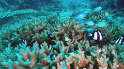 Underwater tropical reef Stock Video Footage