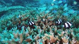 Underwater tropical reef Footage