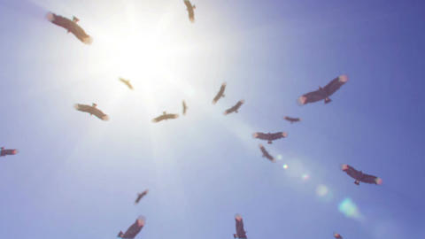 Vultures Circling stock footage