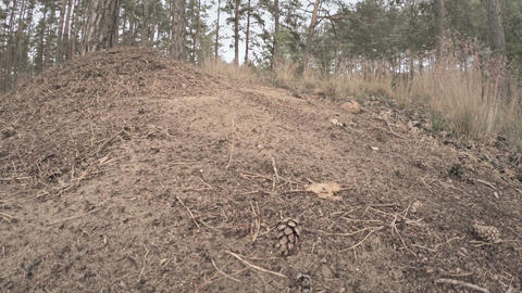 Ants swarming on mound 2 Footage