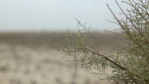 Plant in Barren Land Footage