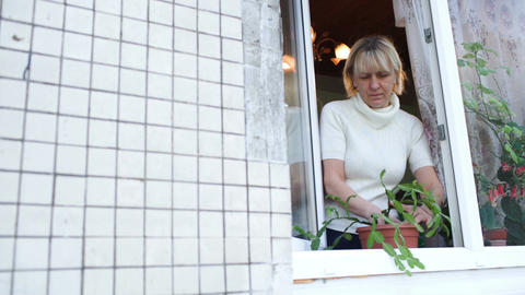 Woman in open window planting a house plant Live Action
