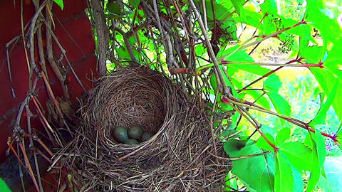 Bird flew out of the nest. Eggs closeup Stock Video Footage