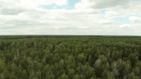 Fly Over The Forest. Aerial Shot Footage