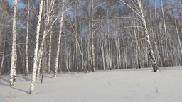 Cold winter in a snowy forest Stock Video Footage