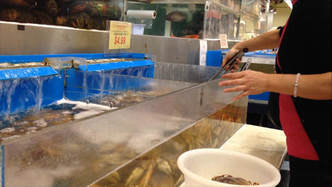 Woman buying fresh crab Stock Video Footage