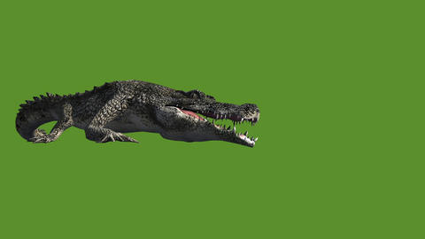 Crocodile open mouth attack hunting,Dangerous animals Live Action