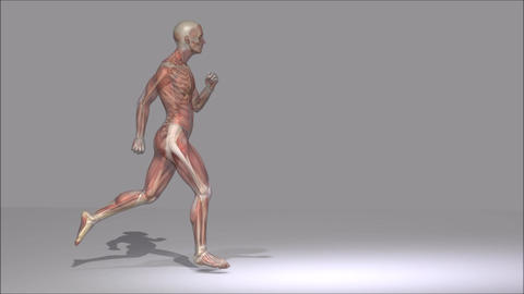 Anatomy Animation