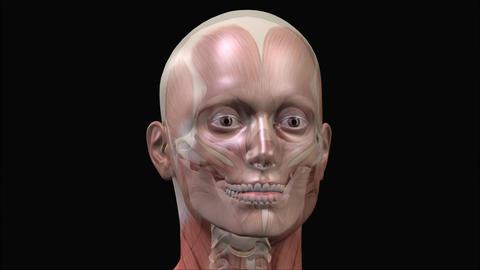 Human Skull Stock Video Footage