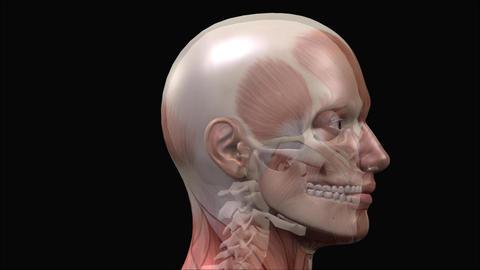 Human Skull stock footage