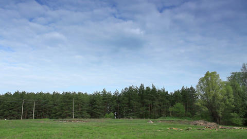 clouds behind the trees in the forest. Full HD (Ti Stock Video Footage