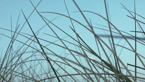 reed Footage