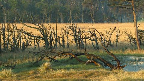 tree root Footage