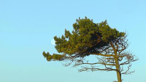 treetop Footage