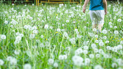 Child walking among dandelions Footage