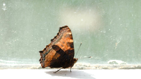 Brown Spotted Butterfly Walking On The Windowsill stock footage