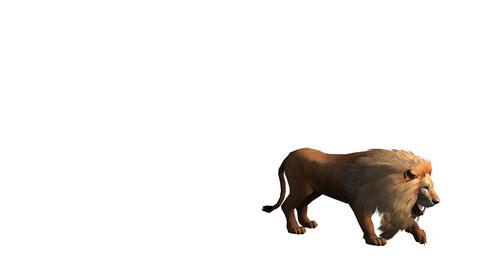 Lion jump to attack bite eating,Endangered wild animal wildlife Footage