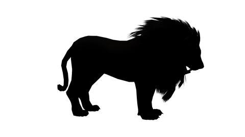 Lion bite eating,Endangered wild animal wildlife sketch... Stock Video Footage