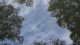 Tops of the birches against the blue sky Stock Video Footage
