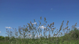 Sunny summer day Grass against the blue sky Stock Video Footage