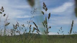 Moving through high grass Footage