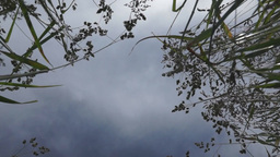 View of a blue sky and tops of high grass Footage