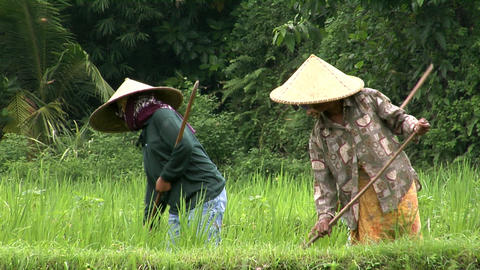 woman working in fields Stock Video Footage