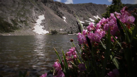 (1208) Colorado Rocky Mountains Alpine Wildflowers Summer... Stock Video Footage