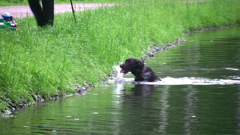 dog on pond Stock Video Footage