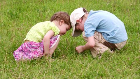 Children explore bug 2 Stock Video Footage