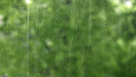 rain and tree 2 Stock Video Footage