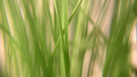 rotating grass 3 Stock Video Footage