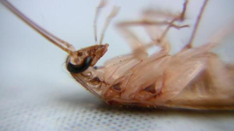 cockroach Footage