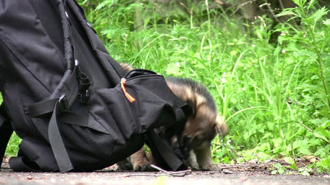 sprogs and knapsack Stock Video Footage