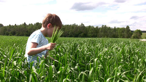 child in grass field Stock Video Footage