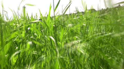 running in grass field Stock Video Footage
