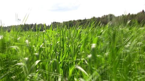 running in grass field Stock Video Footage