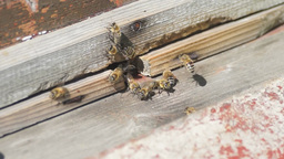 Bees fly into a hive Stock Video Footage
