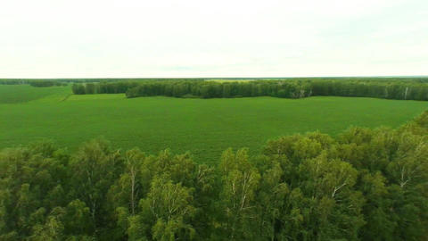 Agriculture. Aerial shot of the field Stock Video Footage