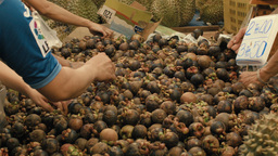 Selecting Mangosteen at a Fresh Fruit Market in Ba Footage