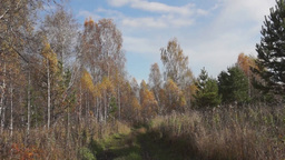 Landscape in the autumn forest Footage