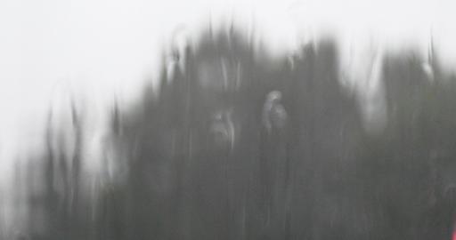 4k Window Raindrops,swaying tree Stock Video Footage