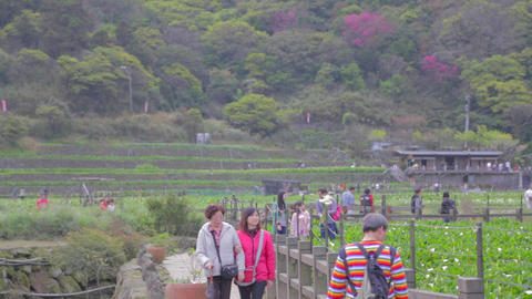people visit yanmingshan flower farm Stock Video Footage