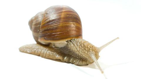 snail 4k Stock Video Footage