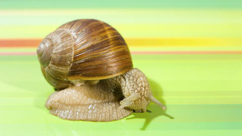 Snail 4k stock footage